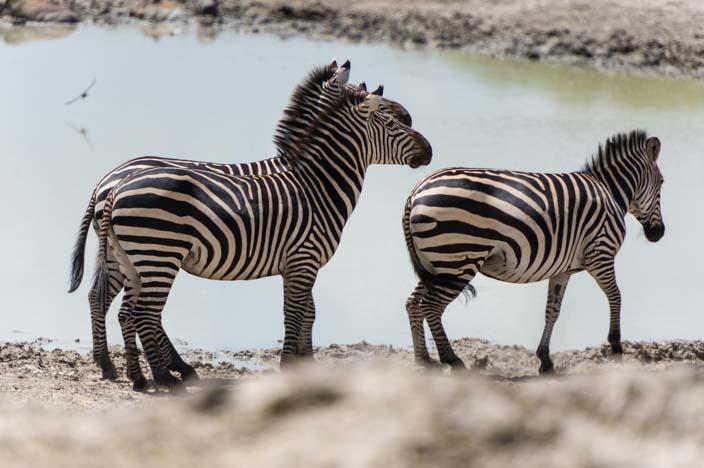 Afrika Tansania Tarangire Nationalpark