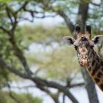 Die erste Safari! Unglaubliches Glück und die schönsten Tiere der Welt