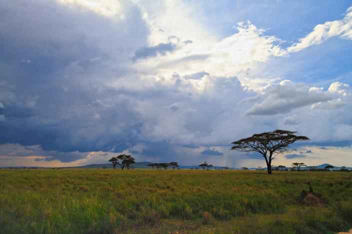 Afrika Tansania Safari Landschaft