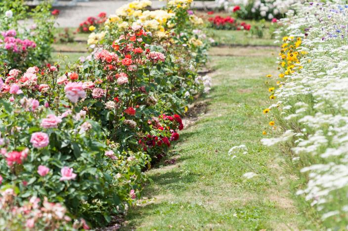 Saverne Rosengarten Roseraie