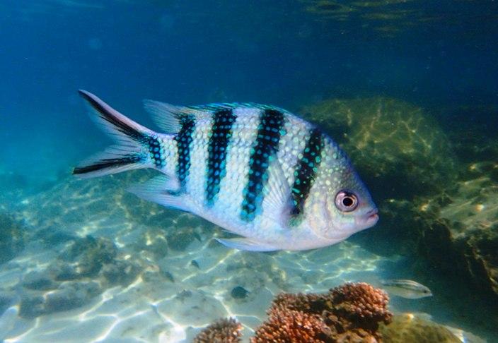 Südseefisch