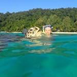 Mit Schildkröten schwimmen: Die besten Spots der Welt