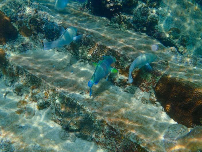 Perhentian Islands Schnorcheln Fische