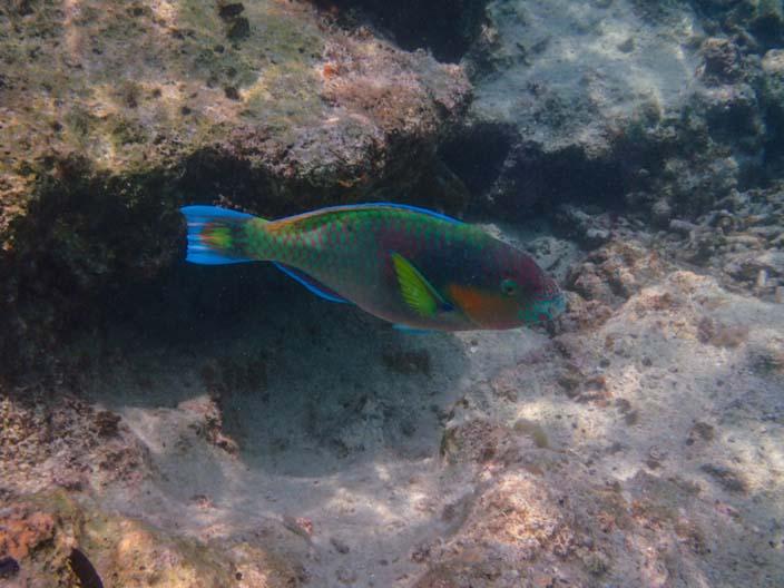 Perhentian Islands Schnorcheln Fisch