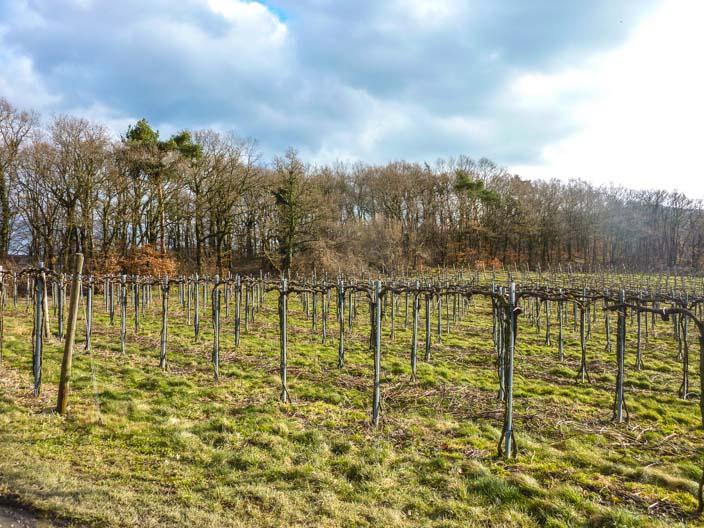 rotweinwanderweg-ahrtal-ahrweiler2
