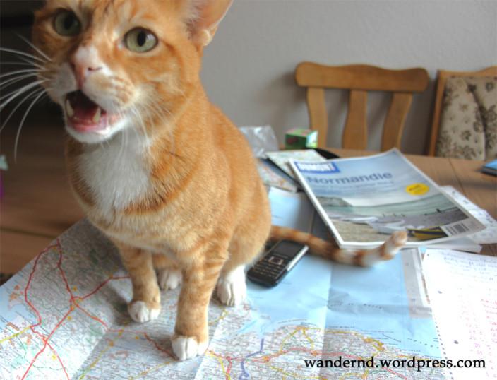 Wohin mit den Katzen im Urlaub