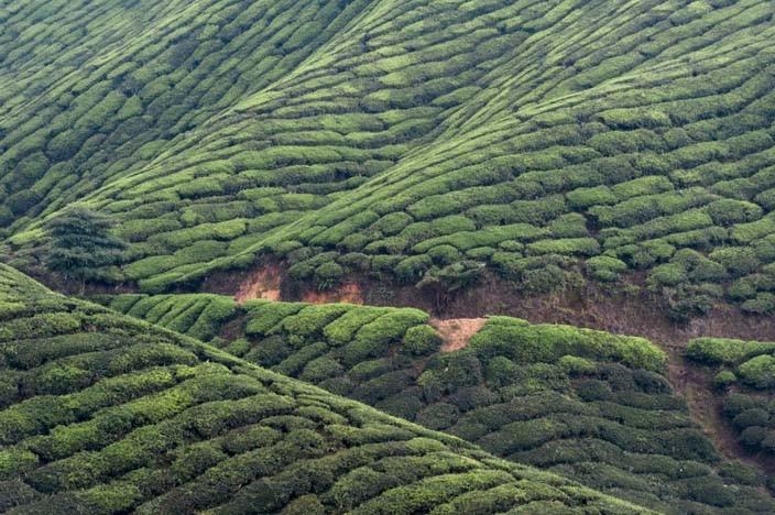 Cameron Highlands Malaysia Reisebericht