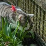 Wohin mit der Katze im Urlaub? 7 Reiseblogger verraten ihre Tipps
