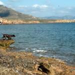 Warum Urlaub mit Hund glücklich macht!