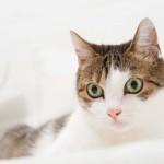 Betreuung der Katze im Urlaub: Katzensitter oder Tierpension?