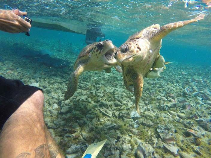 Schildkröten schwimmen