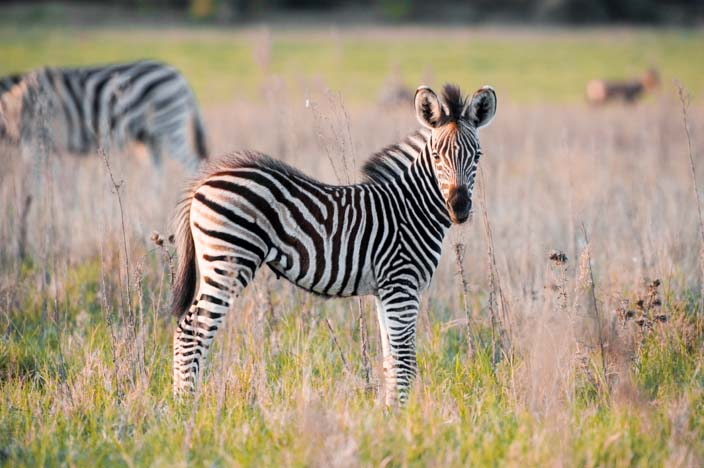Südafrika Rundreise addo elephant park