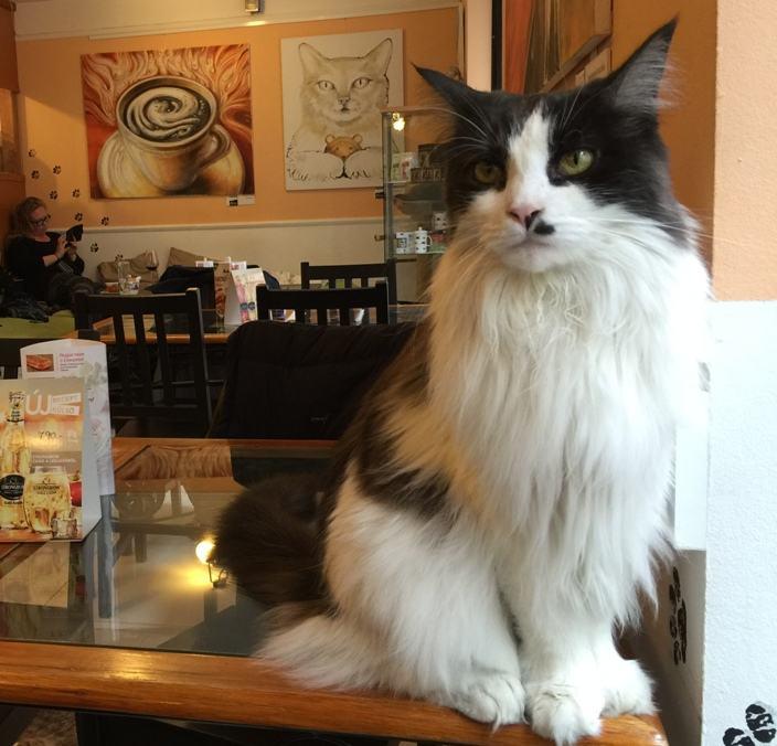 Budapest Café: Cat Café