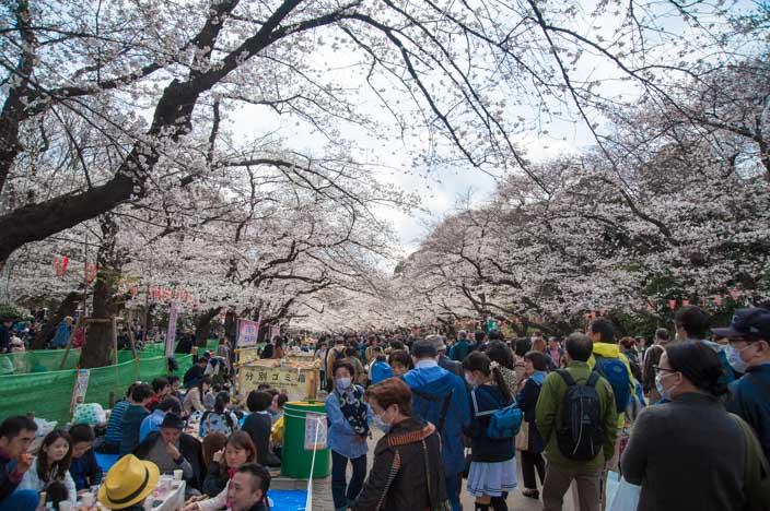 Kirschblüte im Uneo Park