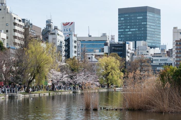 Kirschblüte im Uneo Park am Shiobazu-See mit Tokio im Hintergrund