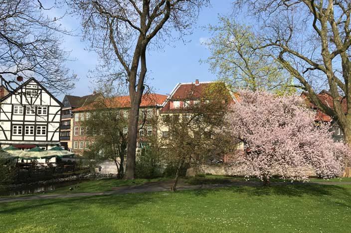 Wolfenbüttel Tipps Park mit Kirschblüte
