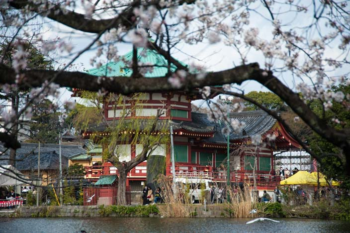 Kirschblüte im Uneo Park mit Toshugu Shrine