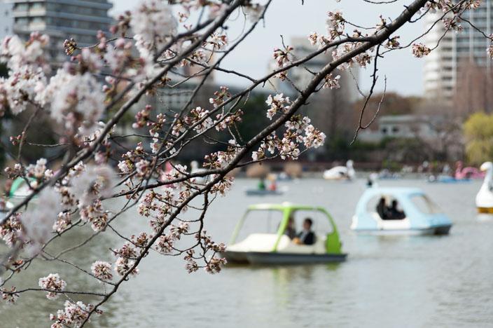 Reiseaufnahmen im März: Vom Blütenzauber in die Sonne
