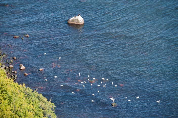 Kreidefelsen Rügen: Blick aufs Meer