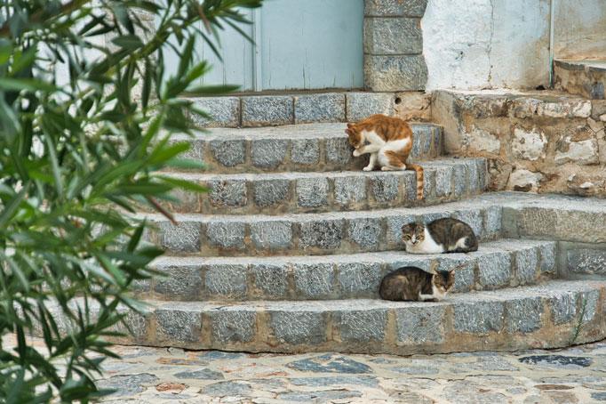 Katzen auf Hydra